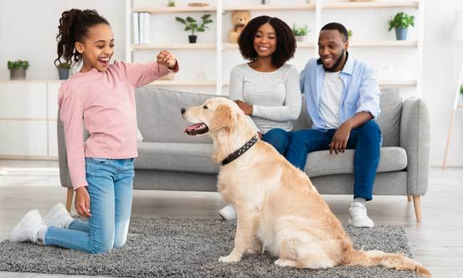 healthy dog tips